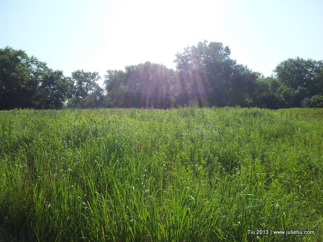 Forest Preserve Bike Path | North Branch Chicago